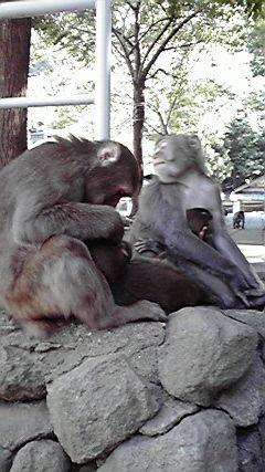 高崎山お猿見学♪